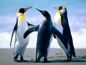 Penguins-300×225